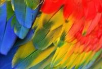 آلبوم پر Feather