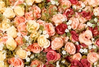 آلبوم گل دو Flower