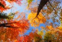 آلبوم درخت Tree
